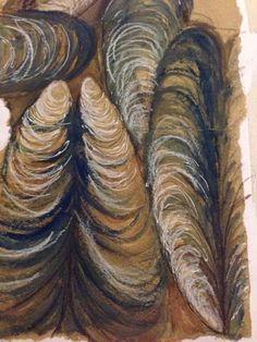 Julia Wright Jewellery, mussel shell drawing