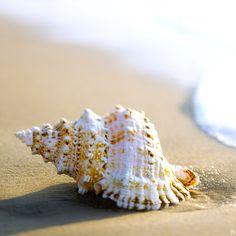 The Sea Shell Resort & Beach Club - Long Beach Island's Premier Oceanfront Resort Hotel Sunset Beach, Ocean Beach, Beach Fun, Long Beach Island, Shell Beach, Natural Forms, Ocean Life, Sea Creatures, Beautiful Beaches