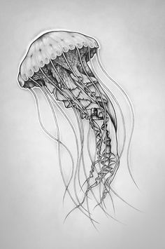 jellyfish silhouette - Google Search