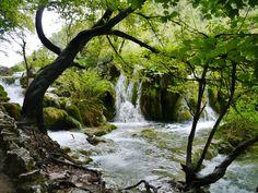 プリトヴィツェ 湖があるので似てはいないが植物の生態は奥入瀬に来たような感覚にもなる。