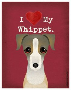 The whippet tag is breaking my heart with all the cuteness