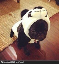 The world's smallest Panda