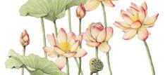 Erika Beyer, Illustration & design.