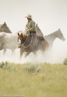 Rounding up the Broncos