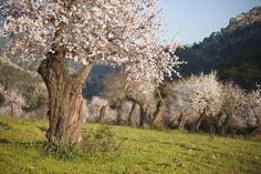 primavera almendros