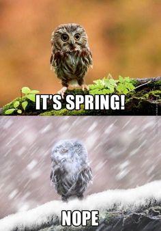 It's spring! Nope.