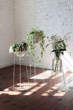 Mooie plantenstandaarden!