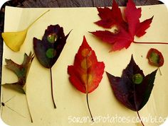 Use this science activity to teach kids in preschool, kindergarten, 1st or 2nd grade why leaves change color.
