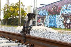 Milo - Miami - Midtown Tracks