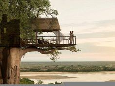 Unbelievably cool structure on a tree branch providing a deck over water