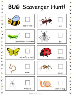 {FREE} Bug Scavenger Hunt! | Preschool Powol Packets Free Preschool, Preschool Printables, Preschool Themes, Cool Science Experiments, Science Activities For Kids, Free Activities, Life Cycles, Pre K, Fun