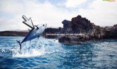 Jisoo Hong   Print Ads Print Ads, Whale, Advertising, Animals, Whales, Animaux, Print Advertising, Animal, Commercial Music