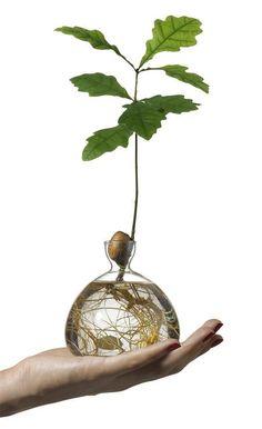Design Vase, Avocado Tree, Decoration Plante, Tree Roots, Trendy Tree, Growing Tree, Glass Paperweights, Oak Tree, Tree Designs