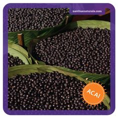 The truth about acai berry Acai Berry, Mother Earth, Shrubs, Berries, Healthy Eating, Trees, Gardening, Drink, Fruit
