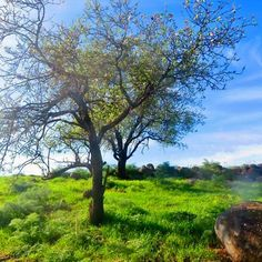 Did you know: Israel is the only country that entered the 21st Century with a net gain in its number of trees. #nature #LiveLoveIsrael (photo by @michalmizrachi24)