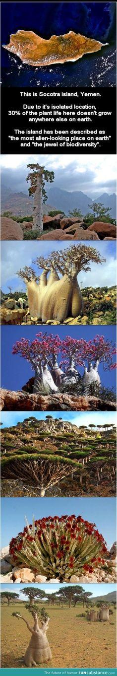 Socotra island (alien island)