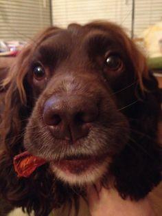 Jasper with Chew