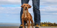 Grubs Boots Discover Walking Trainers Review – woofwagwalk.co.uk