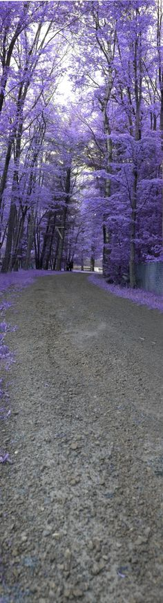 """Real(Mislabeled) - Pinned as natural:  """"Purple Path"""" by Hayden Greene who states """"This is the walkway down to Bryn Mawr Lake in Pennsylvania. This was shot at dusk and then inverted in Photoshop. The Purples complimented the greyed out path and made this image pop."""" Contest entry......"""