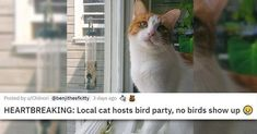 We love everything cats. #cats #funnycats #cutecats #catvideo #catphotos #catgifs #cuteanimals Cat Memes, Funny Memes, Cute Cats, Funny Cats, Bird Party, Cat Gif, Cute Animals, Life, Ouat Funny Memes