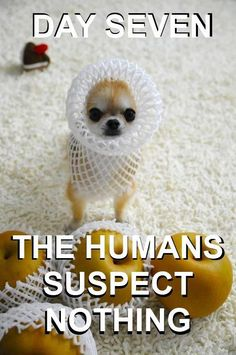 Day 7 The humans suspect nothing