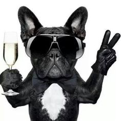 """Here's to All my Fellow Fashionistas Who Survived Paris Fashion Week"", Fabulous French Bulldog."