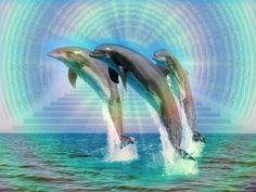 Mooie dolfijnen ♥