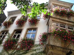 Strasbourg | Flickr - Photo Sharing!