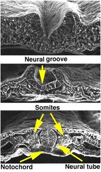 Aula de Anatomia | Sistema Nervoso