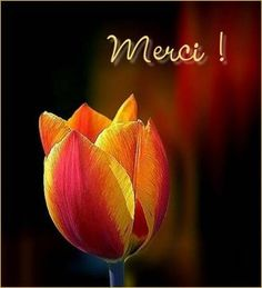 merci - Page 5 Beautiful Flowers Pictures, Flower Pictures, Love Flowers, Beautiful Things, Thank You Wishes, Thank You Quotes, Good Afternoon Quotes, Good Morning Quotes, Merci Gif