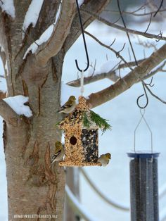 Winter Fun DIY: Create Bird Seed Cottage Feeder