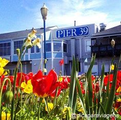Pier 39 on Spring time #sanfrancisco #dicaparaviagens