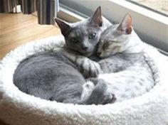 Cat Behaviour #CatBehaviour - Know more about Cat Behaviour at Catsincare.com!