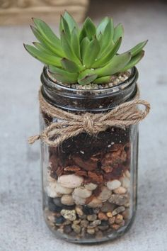 Succulent care - how easy is it to care for succulents? , Garden plants easy to care for Succulent in a glass. Check more at von sukkulenten Succulent care - how easy is it to care for succulents? Diy Garden, Garden Care, Garden Plants, House Plants, Garden Ideas, Jar Plants, Garden Gifts, Plants In Mason Jars, Garden Junk