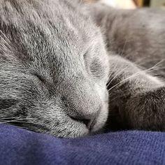 #sleepingbaby #momentosdefelicidad #relax #bienvenidogucci #welcomehomebaby