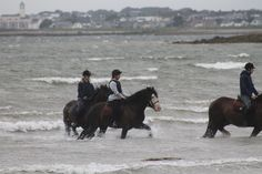 All That Jazz's first time at the beach. He is the middle horse. #loveirishhorses #horseforsale Call James +353 (0) 83 3168366 or email coopershillequine@gmail.com