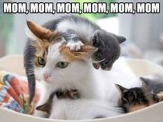 Mom mom mom mom mom!! SHUT UP!!