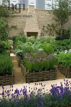 08mh26 Potager and herb garden raised beds borders edged by wicker natural kitchen crop harvest edible organic ecological lavender Lavandula outdoor fire cooker wall Design: del Buono Gazerwitz, Spencer Fung Architects for Daylesford Organic RHS Chelsea Flower Show 2008 UK Marcus Harpur