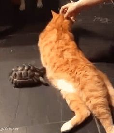 """No, I won't stop """"Boom"""". You stole my strawberry, Kevin """"Boom"""".  I'll never stop!! *boom*  Kevin, this is war """"Boom"""" [.gif]"""