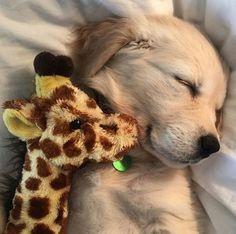 A puppy and their giraffe.