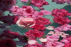 imagen descubierto por Noor. Descubre (¡y guarda!) tus propias imágenes y videos en We Heart It Flower Aesthetic, Pink Aesthetic, E Dawn, Persephone, Wild Hearts, Dahlia, Mother Nature, Aesthetic Wallpapers, Pretty