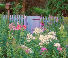 cottage garden with phlox and lilies