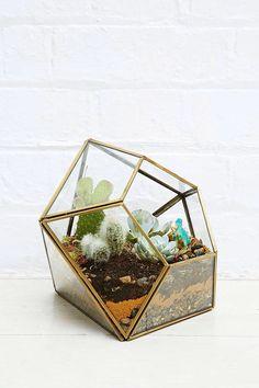 Urban outfitters plant vivarium