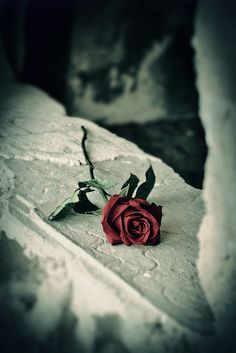 Beauty and the Beast.the moment Beast lets Belle go home to her father. Dark Beauty, Beautiful Roses, Beautiful World, Fantasy Photography, Rose Photography, Artistic Photography, Foto Art, Belle Photo, Dark Art