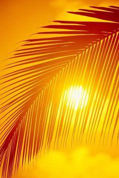 Hawaii Silhouette Of Palm Frond Against Golden Orange Sky Sun Ball Puffy Cloud Along Bottom Canvas Art - Ron Dahlquist Design Pics x Blue Jaune Orange, Orange Sky, Palm Tree Sunset, Palm Trees, Image Zen, Mellow Yellow, Yellow Sun, Golden Yellow, Golden Brown
