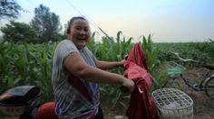 Cotton Farmers of Julu Film