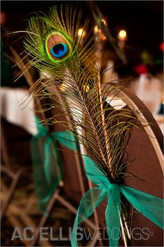 Peacock chair decorations for next Spring's ceremony