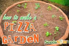How To Make a Pizza Garden ....how absolutely adorable!!
