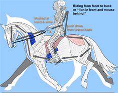 Spiral Seat: Foundation of Biomechanical Riding