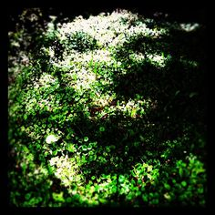 another face in the grass #spooky #creepy